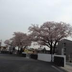 校門に咲く桜
